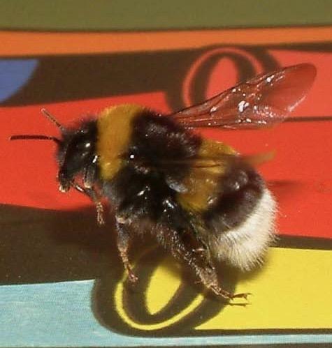 bee flying over vases